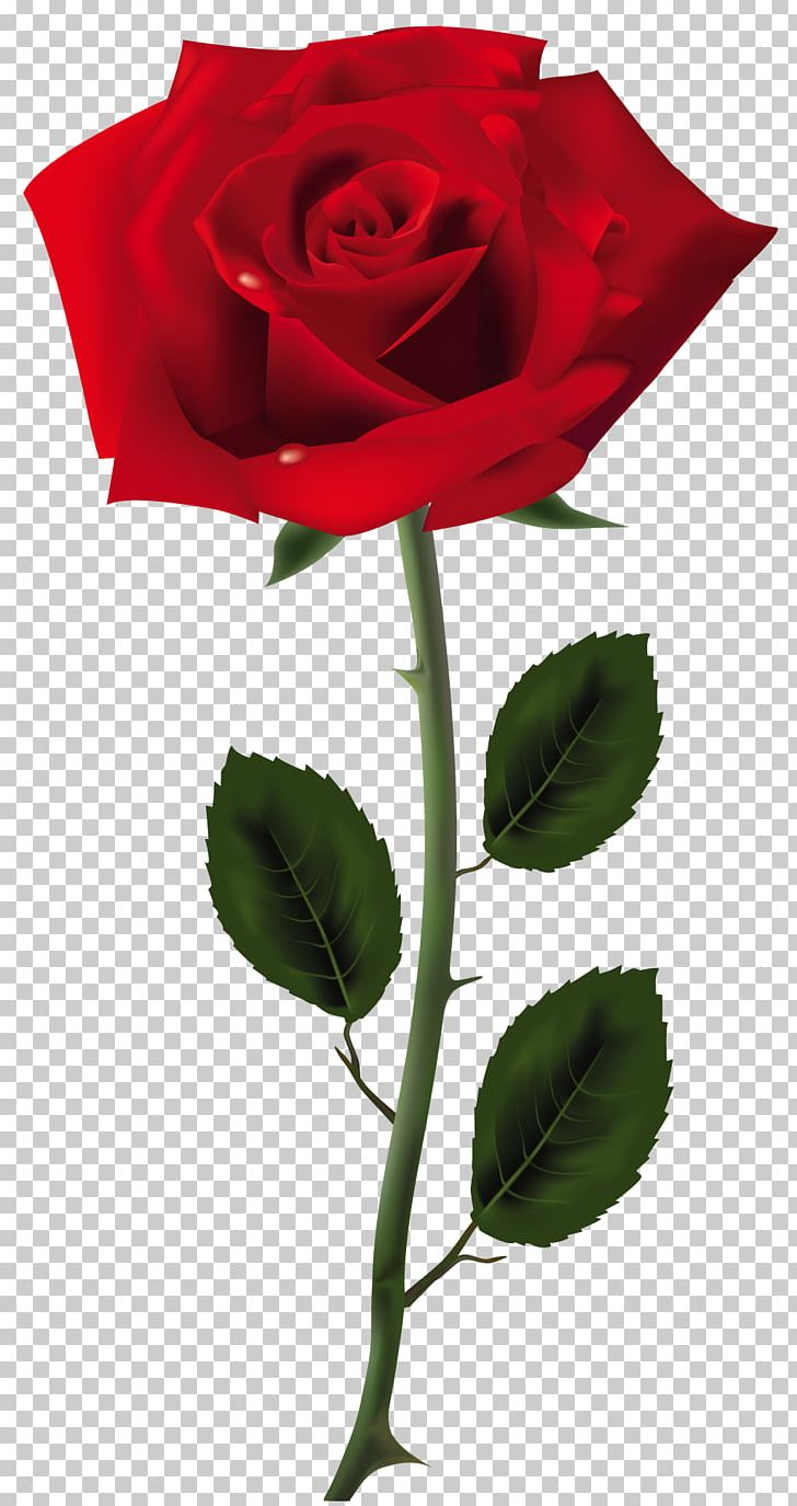 Rose PNG, Clipart, Blue Rose, China Rose, Clipart, Clip Art, Color Free PNG Download