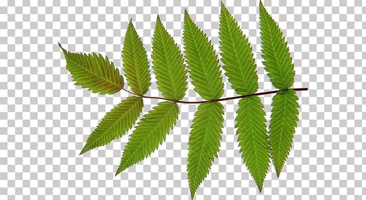 Look At Leaves Desktop PNG, Clipart, Autocad Dxf, Autumn Leaf Color, Download, Hemp, Herbalism Free PNG Download