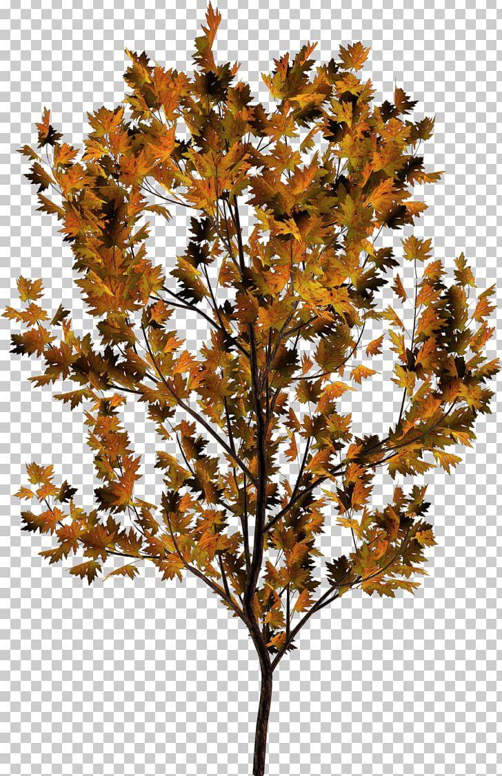 Twig Plant Stem Leaf Deciduous PNG, Clipart, Autumn, Branch, Deciduous, Leaf, Plant Free PNG Download