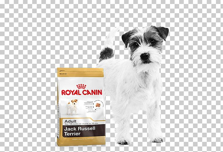 Jack Rus Terrier Cat Food Puppy Dog Royal Canin Png