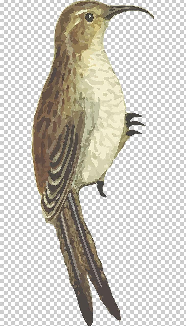 Bird PNG, Clipart, Animal, Animals, Beak, Bird, Bird Flight Free PNG Download