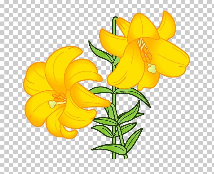 Lilium Flower Book Illustration Png Clipart August Birth Flower