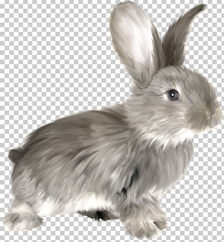 Rabbit PNG, Clipart, Animals, Black And White, Blog, Computer Cluster, Computer Icons Free PNG Download