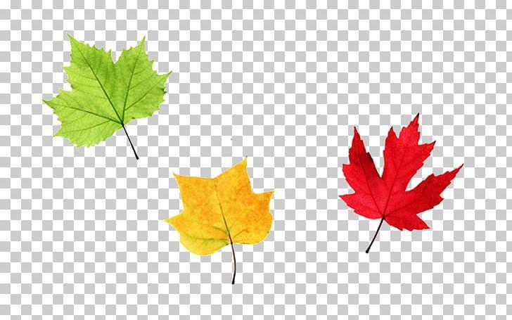 Maple Leaf Autumn PNG, Clipart, Autumn, Autumn Leaf, Color, Encapsulated Postscript, Graphic Design Free PNG Download