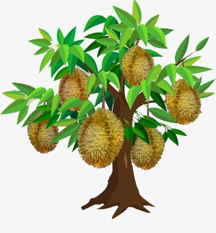Durian Tree PNG, Clipart, Beautiful, Decoration, Durian
