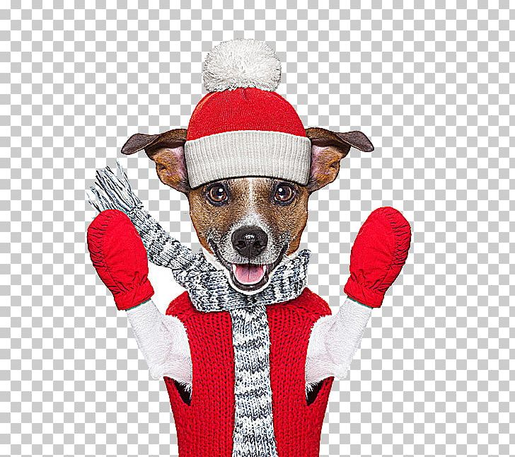 Jack Russell Terrier Winter Stock Photography PNG, Clipart, Animals, Carnivoran, Christma, Christmas Decoration, Christmas Frame Free PNG Download
