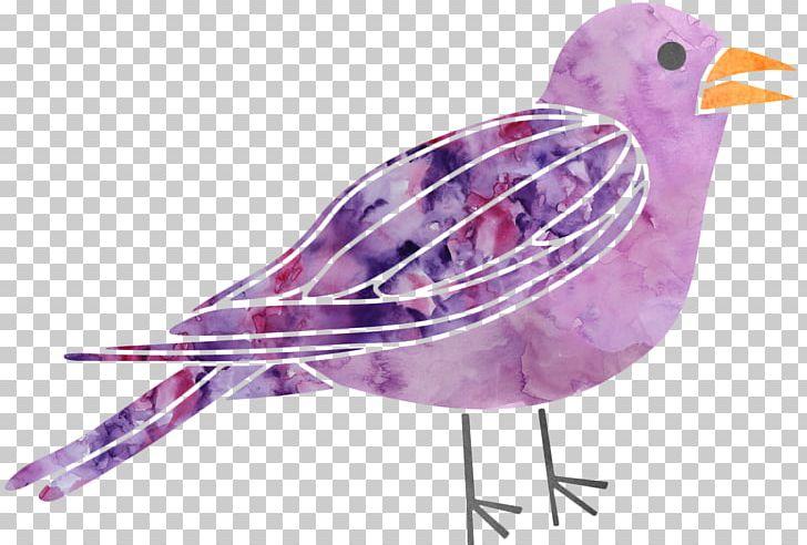 Beak Water Bird Fauna Feather PNG, Clipart, Beak, Bird, Fauna, Feather, Organism Free PNG Download