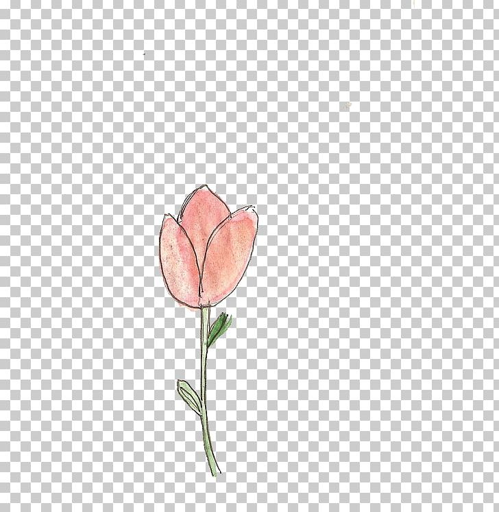 Rose Family Cut Flowers Pink M Plant Stem Bud PNG, Clipart, Bud, Cut Flowers, Family, Flora, Flower Free PNG Download