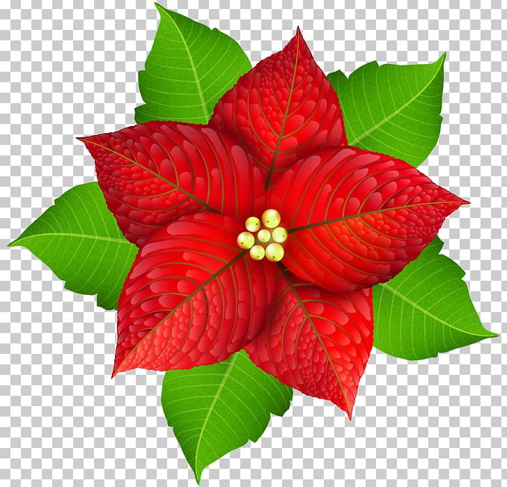Poinsettia Christmas Png Clipart Art Christmas Christmas Christmas Clipart Christmas Poinsettia Clip Art Free Png Download