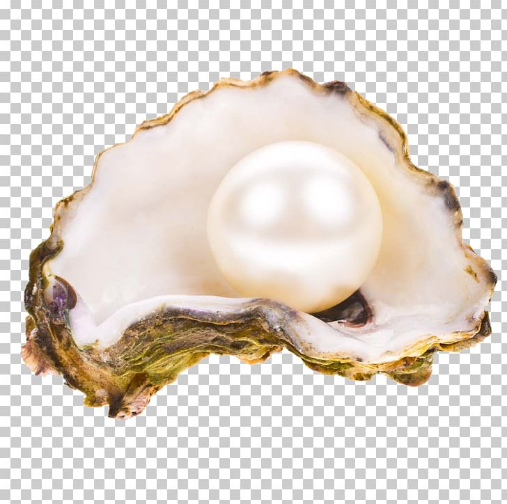 Open oyster clipart Free download open shell of the oyster material png  images   Kelsey.holliefindlaymusic.com