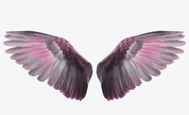 Wings To Fly PNG, Clipart, Advertising, Angel, Angel Wings, Animal, Animal Wing Free PNG Download