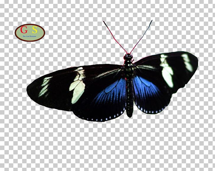 Brush-footed Butterflies Butterfly Butterflies And Moths PNG, Clipart, Arthropod, Brush Footed Butterfly, Butterflies And Moths, Butterfly, Insect Free PNG Download