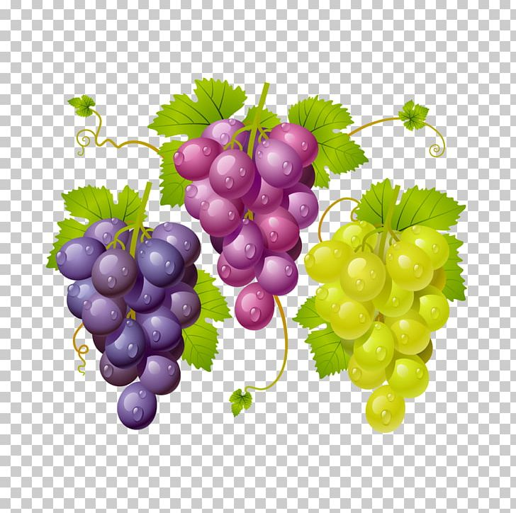 Grapes Png Clipart Black Grapes Common Grape Vine