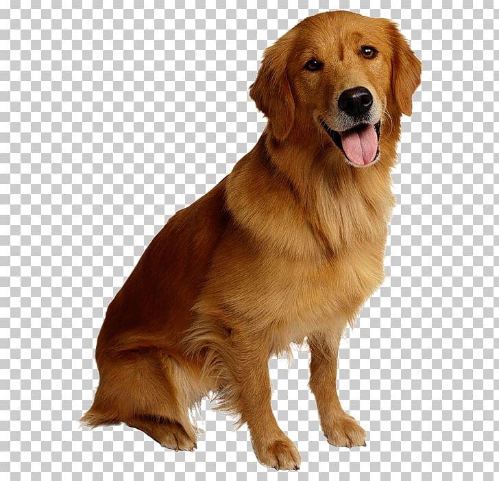 Dog Cat Pet Backup Camera PNG, Clipart, Animals, Camera, Camera Lens, Carnivoran, Collar Free PNG Download