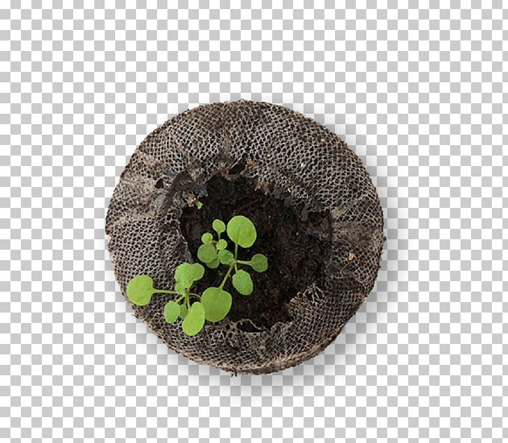 Lighting Seed Experiment Plants Month PNG, Clipart, Columbia, Experiment, Flowerpot, Grass, Lighting Free PNG Download