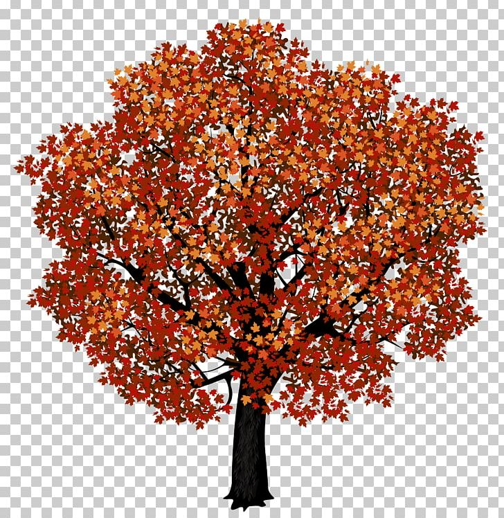 Red Maple Japanese Maple Autumn Leaf Color PNG, Clipart, Autumn, Autumn Leaf Color, Branch, Clipart, Clip Art Free PNG Download