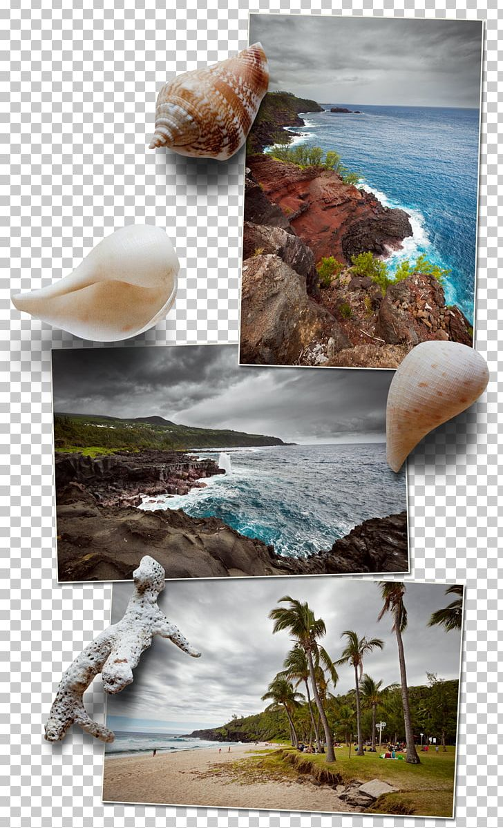 Stock Photography Organism PNG, Clipart, Organism, Others, Photography, Reunion, Stock Photography Free PNG Download