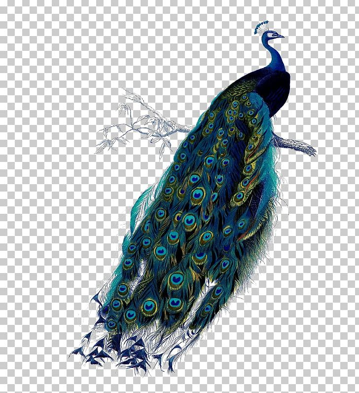 Bird Asiatic Peafowl Feather Green PNG, Clipart, Animals, Art, Asiatic, Asiatic Peafowl, Bird Free PNG Download