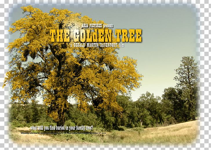 Web Design Sacramento Golden Tree Way California Gold Rush PNG