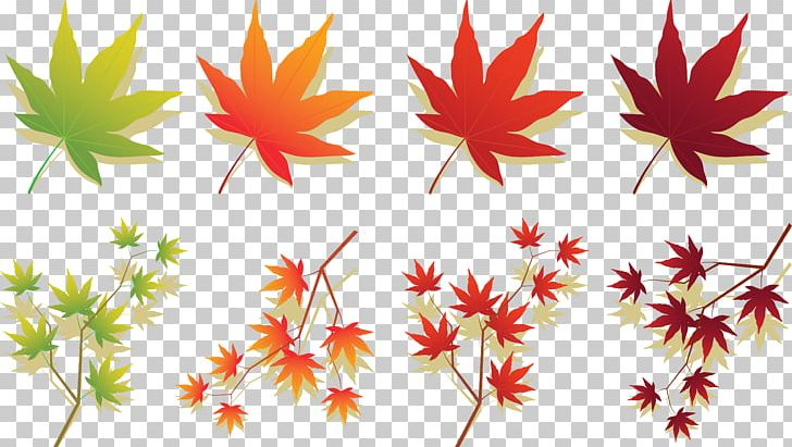 Maple Leaf Japanese Maple Autumn Leaf Color PNG, Clipart, Autumn, Autumn Leaf Color, Botany, Branch, Computer Icons Free PNG Download