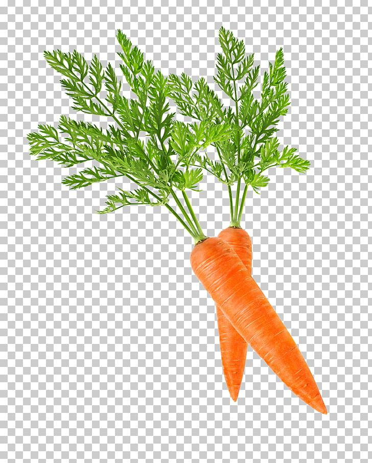 Baby Carrot Png Clipart Baby Ca Bunch Of Carrots Carrot Carrot