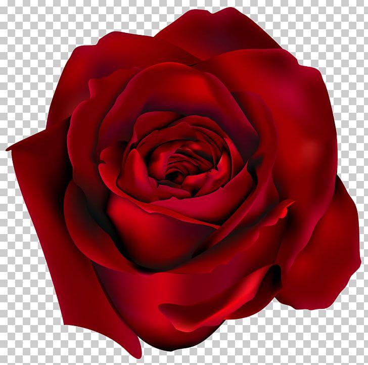 Rose PNG, Clipart, Blog, China Rose, Clipart, Clip Art, Closeup Free PNG Download