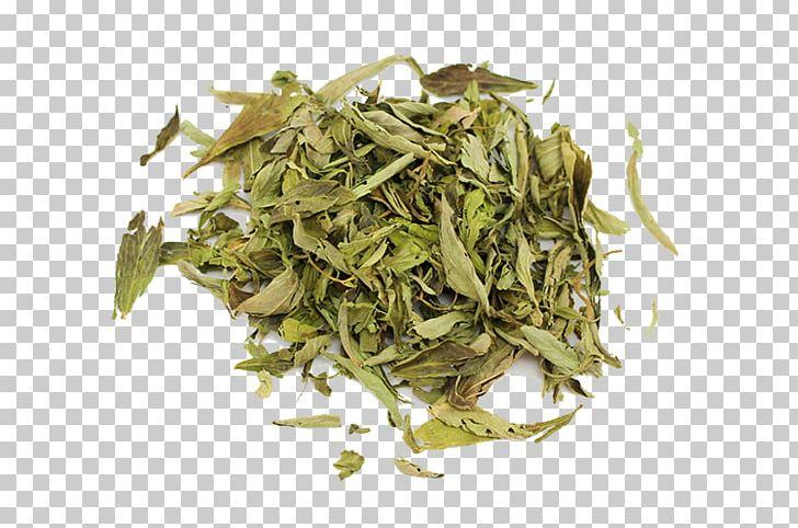 Hōjicha Nilgiri Tea Bancha Sencha Gyokuro PNG, Clipart, Baihao Yinzhen, Bai Mudan, Bancha, Biluochun, Ceylon Tea Free PNG Download