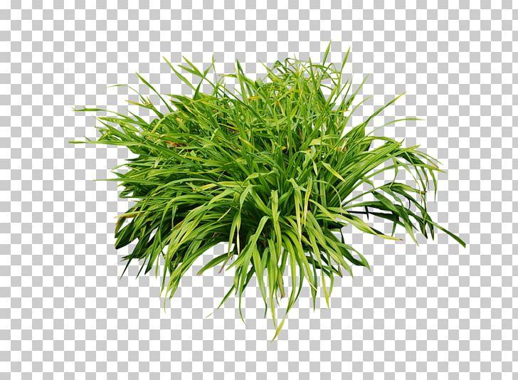 Aquarium Aquatic Plants Leaf Shrub PNG, Clipart, Algae