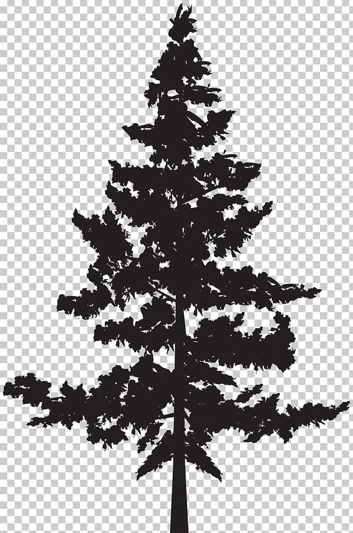 Christmas Tree Clipart Black And White.Black Pine Tree Pinus Contorta Png Clipart Black And White