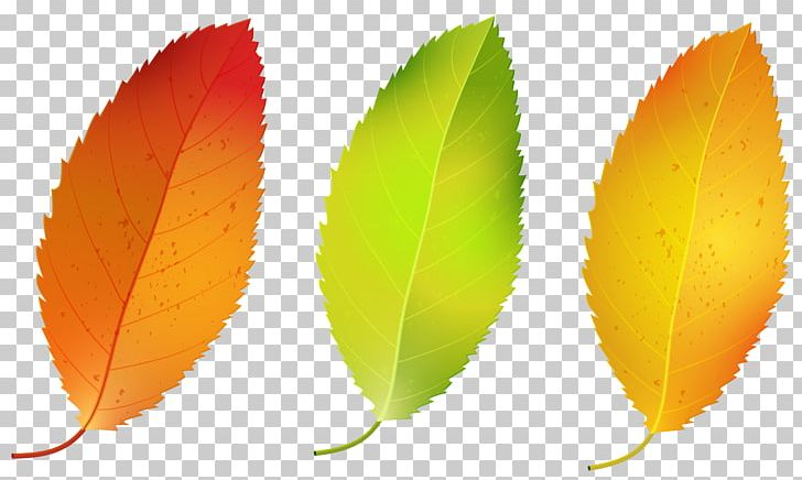Autumn Leaf Color Birch PNG, Clipart, Autumn, Autumn Leaf Color, Autumn Leaves, Birch, Clip Art Free PNG Download