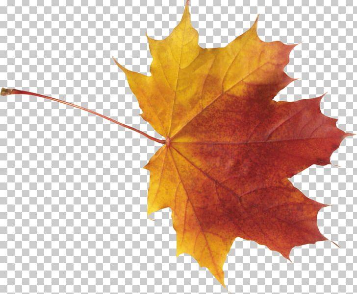 Autumn Leaf Color PNG, Clipart, Autumn, Autumn Leaf Color, Autumn Leaves, Cdr, Clipping Path Free PNG Download