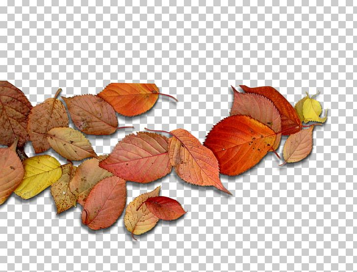 Deciduous Leaf Autumn Leaves PNG, Clipart, Autumn, Autumn Leaves, Deciduous, Decorative Patterns, Download Free PNG Download
