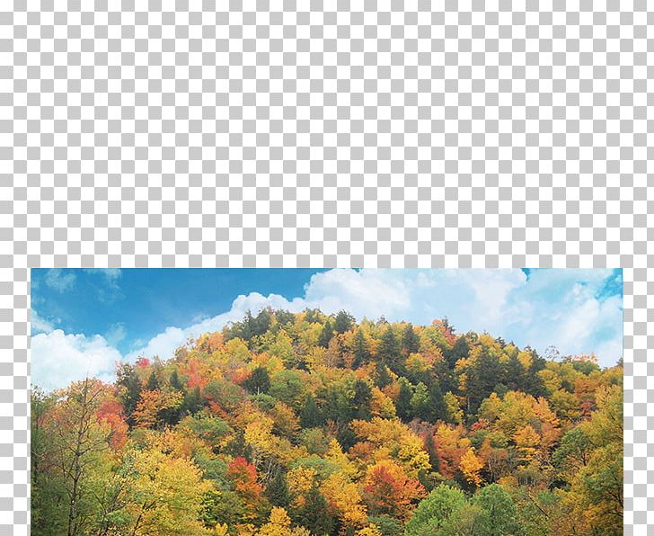 Autumn In New England Mohawk Trail Autumn Leaf Color Temperate Broadleaf And Mixed Forest PNG, Clipart, Autumn In New England, Biome, Forest, Landscape, Leaf Free PNG Download