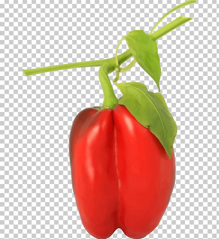 Bell Pepper Taco Chili Pepper Black Pepper Spice PNG, Clipart, Bell, Bell Pepper, Black Pepper, Cayenne Pepper, Chili Pepper Free PNG Download