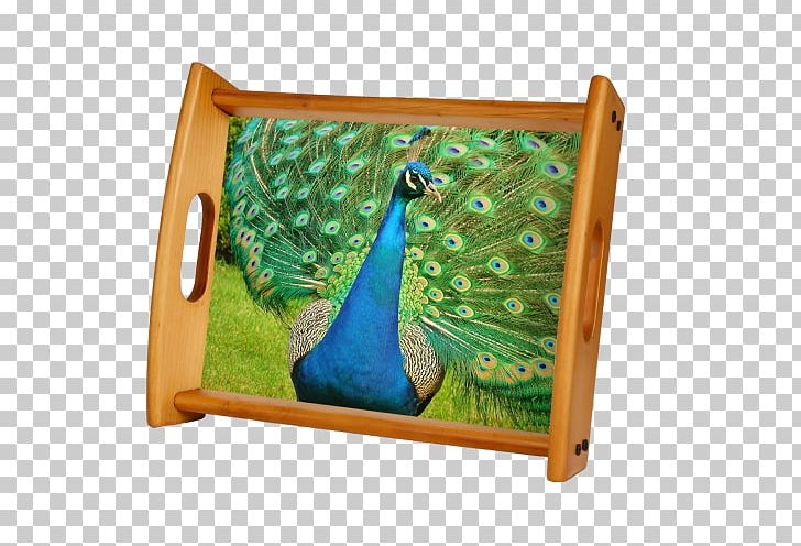 Pavo Bird Asiatic Peafowl Feather Animal PNG, Clipart, Adaptation, Animal, Animals, Asiatic Peafowl, Bird Free PNG Download