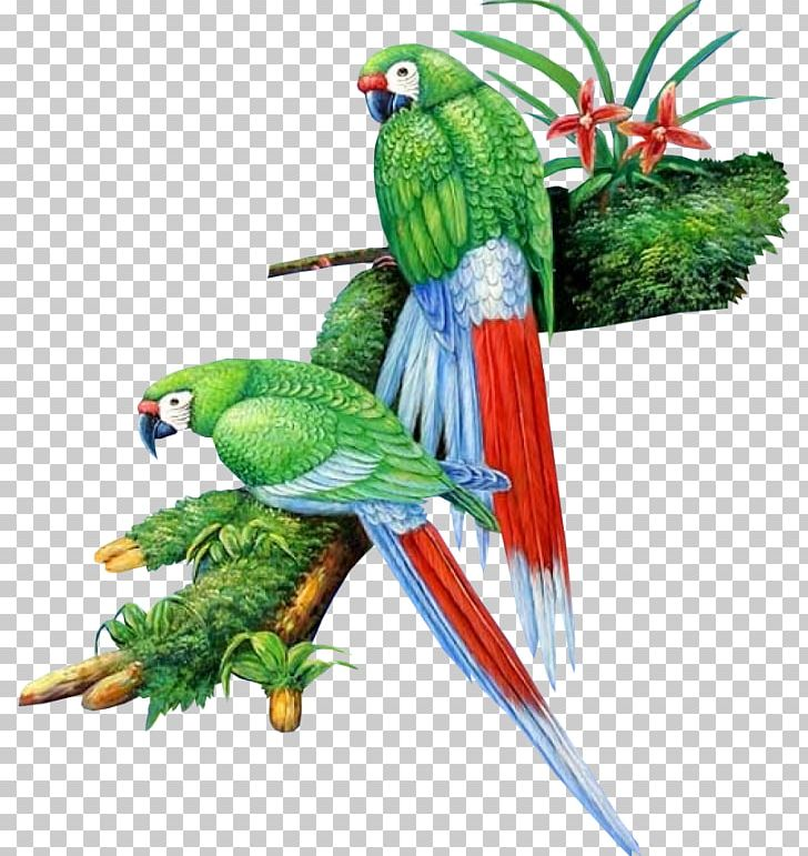 Lovebird Parrot Cygnini PNG, Clipart, Animal, Animals, Art, Beak, Bird Free PNG Download