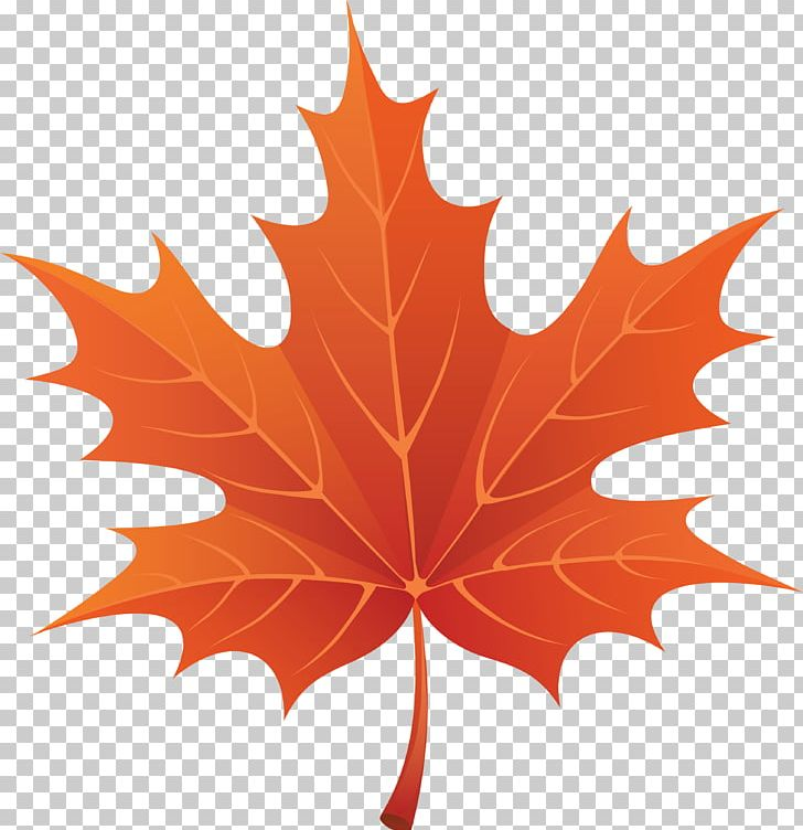 Fall leaves wallpaper. Autumn leaf color png