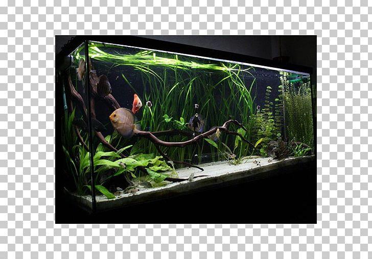 Goldfish Aquariums Discus Aquascaping Png Clipart Animals Aquarium Aquarium Decor Aquariums Aquascape Free Png Download