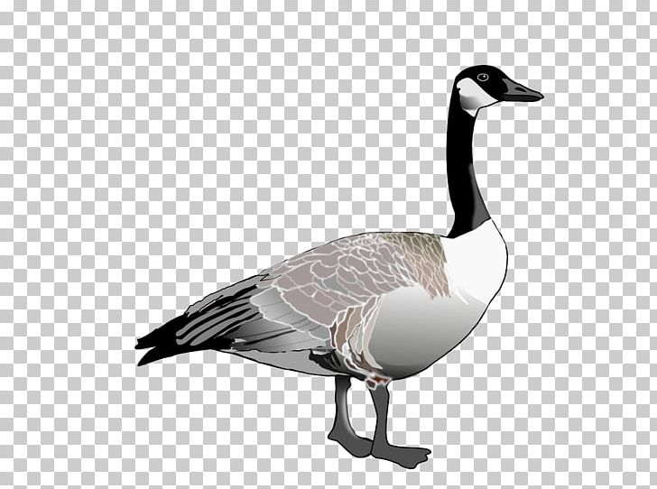 Goose PNG, Clipart, Goose Free PNG Download