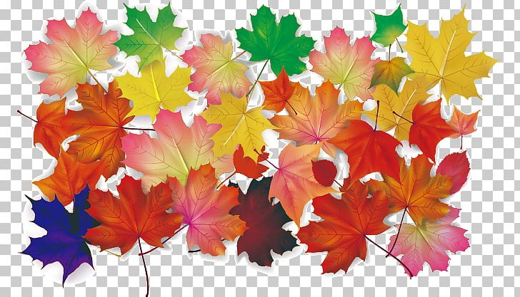 Maple Leaf Autumn Leaves PNG, Clipart, Autumn, Autumn Leaf Color, Autumn Leaves, Autumn Vector, Banana Leaves Free PNG Download
