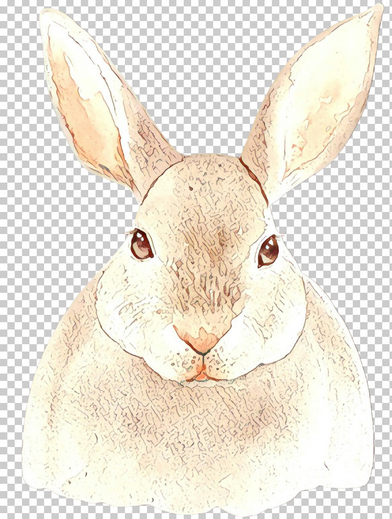 Rabbit Mountain Cottontail Rabbits And Hares Hare Snout PNG, Clipart, Ear, Hare, Mountain Cottontail, Rabbit, Rabbits And Hares Free PNG Download