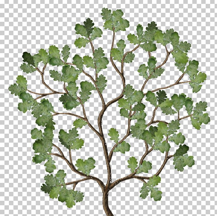 Twig Leaf Vegetable Plant Stem Family PNG, Clipart, Branch, Correct, Diffuse, English, Family Free PNG Download