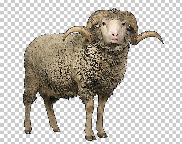 Merino Scottish Blackface Wool Stock Photography Sheep Shearing PNG, Clipart, Animals, Argali, Bighorn Sheep, Cow Goat Family, Fauna Free PNG Download