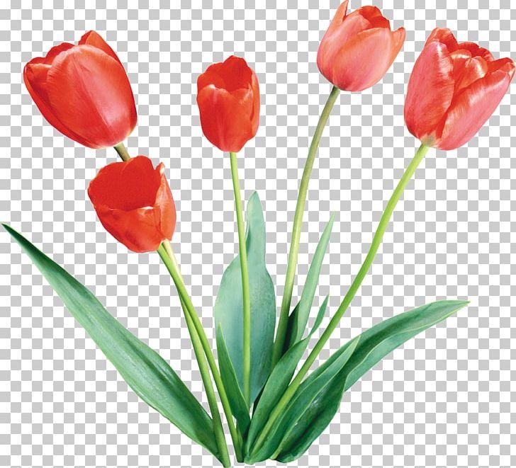 Flower Tulip Color Desktop PNG, Clipart, Color, Cut Flowers, Daffodils, Desktop Wallpaper, Flower Free PNG Download