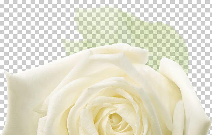 Garden Roses Floral Design Cut Flowers Flower Bouquet PNG, Clipart, Ceremony, Closeup, Cut Flowers, Floral Design, Floristry Free PNG Download