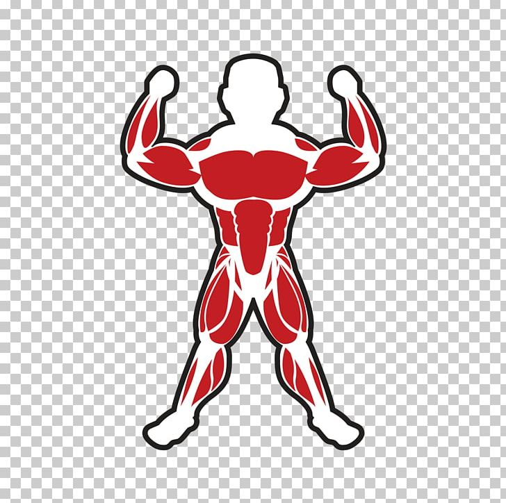 Skeletal Muscle Bodybuilding Adipose Tissue PNG, Clipart, Adipose Tissue, Area, Arm, Artwork, Bodybuilding Free PNG Download