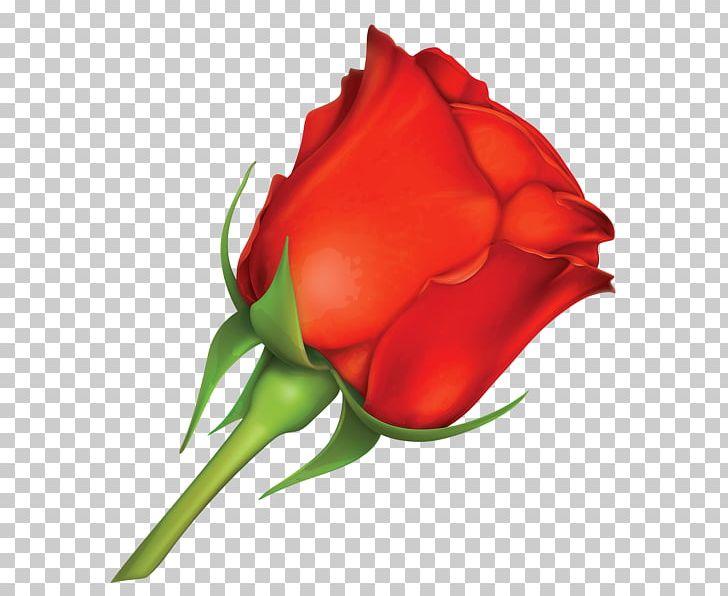 Rose Valentine's Day Greeting & Note Cards PNG, Clipart, Bud, Closeup, Cut Flowers, Encapsulated Postscript, Floribunda Free PNG Download