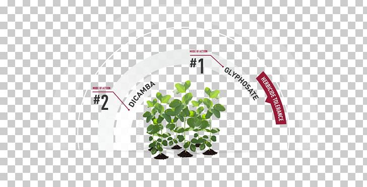Herbicide Genetically Modified Soybean Glyphosate Dicamba PNG, Clipart, Alfalfa, Area, Brand, Crop, Dicamba Free PNG Download