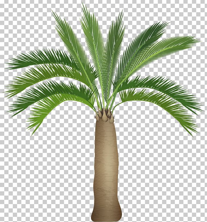 Plant Stem Palm Tree Arecaceae PNG, Clipart, Arecaceae, Arecales, Art, Attalea Speciosa, Borassus Flabellifer Free PNG Download