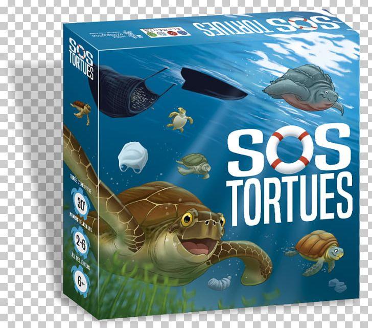 Sea Turtle Oceanographic Museum SOS Tortues Game PNG